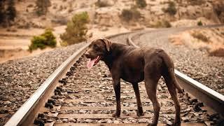 Как определить бешенство у собаки?