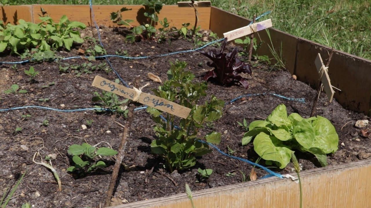 Oasis Carriet : Jardin partagé en ville