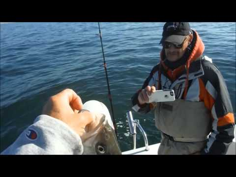 I Caught  A Tagged Fish  Now What ?