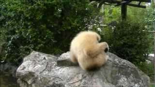 タイ、チェンマイ動物園Thailand ChiangMai Zoo.