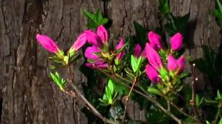 Мир цветов - доставка цветов по Алматы www.mir-cvetov.kz(, 2013-05-14T04:13:20.000Z)