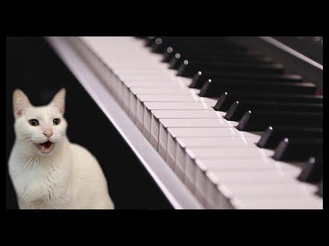 Cotton Eye Joe - Cats Version - Singing Cats - Cats Parody