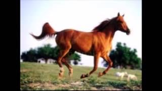 At Ayak Sesleri Dörtnala At
