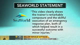 Video shows whale attacking trainer at Sea World