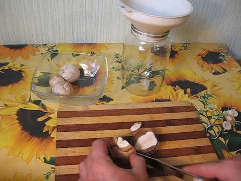 купить мицелий только гриба веселки