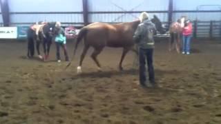 Jane Melby uses Reggie in barrel clinic demo