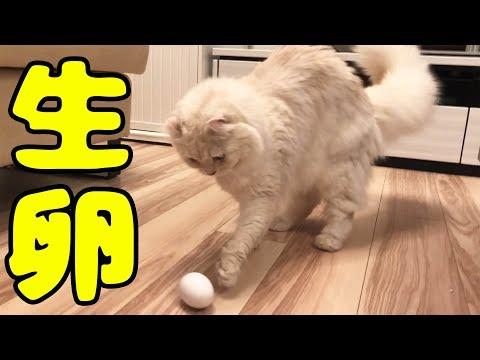 猫に卵を与えてみた、、、