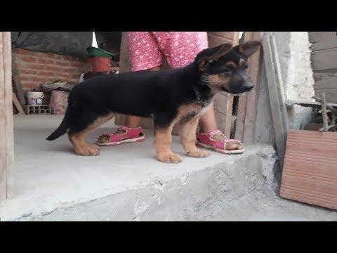 Da 1 con Asty | Educa a tu mascota desde cachorro.