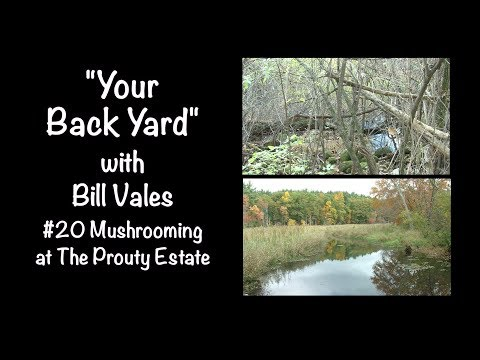 Your Back Yard #20, Mushrooming at The Prouty Estate, Littleton, MA