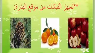 النباتات البذرية