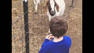 Two Goats At Uncle Shuck's Corn Maze