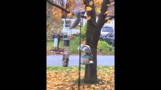 Squirrel Proof Birdfeeder - Home Made Baffle