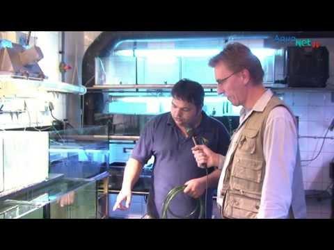 """Das """"Aquarium Berlin"""" im Zoo der Hauptstadt"""
