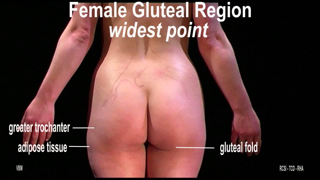 Surface Anatomy - Gluteal region (2D) - YouTube