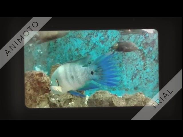???? ???????? Clown fish