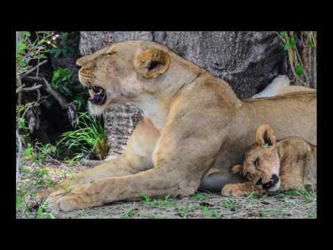 2016 Tanzania Zanzibar Vacation Liz and Keith