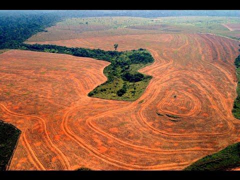 Niszczenie przyrody