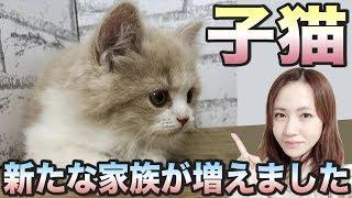 【子猫】新しい家族が増えました!かわいすぎてメロメロ♪ [子猫1日目]