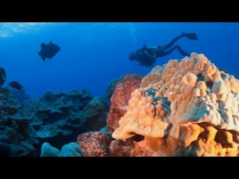The Cook Islands, Travel Video Guide - Scuba Diving Rarotonga