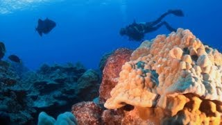 Scuba Diving Rarotonga The Cook Islands Travel Video
