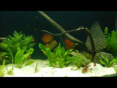 How Soon can you add Fish to your New Aquarium ?