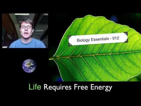 Life Requires Free Energy