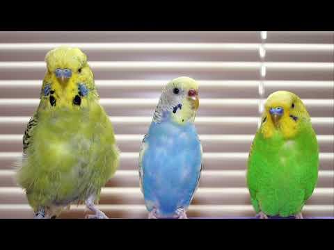 20 Facts About Parrots