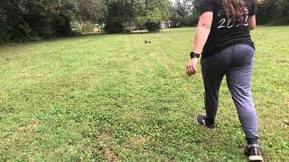 Piper | Coonhound | Obedience Training