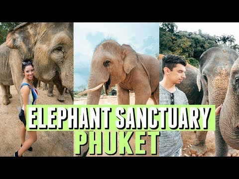 Phuket Elephant Jungle Sanctuary | Phuket, Thailand Things to Do 2017