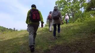佐紀盾列古墳群③称徳天皇陵から④瓢箪山古墳までを歩きます