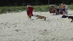 Hundestrand Binz 2009