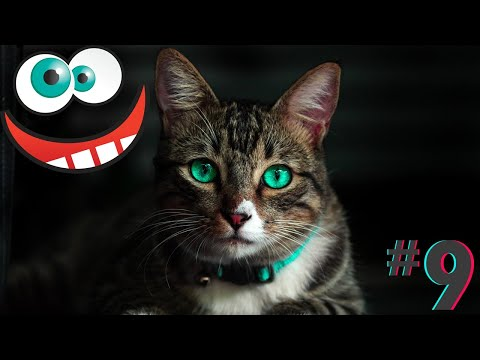 Funny animals compilation cats and dogs fails videos fun moments #9