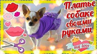 Платье и Кофта собаке своими руками как сшить?  Выкройка простая. Одежда Чихуахуа шьем. #чихуахуа