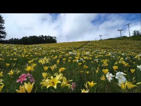 春香山ゆり園スライドショー