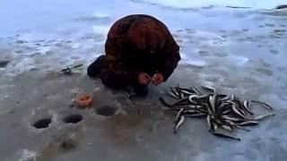 Ловля наваги на Белом море близ Архангельска