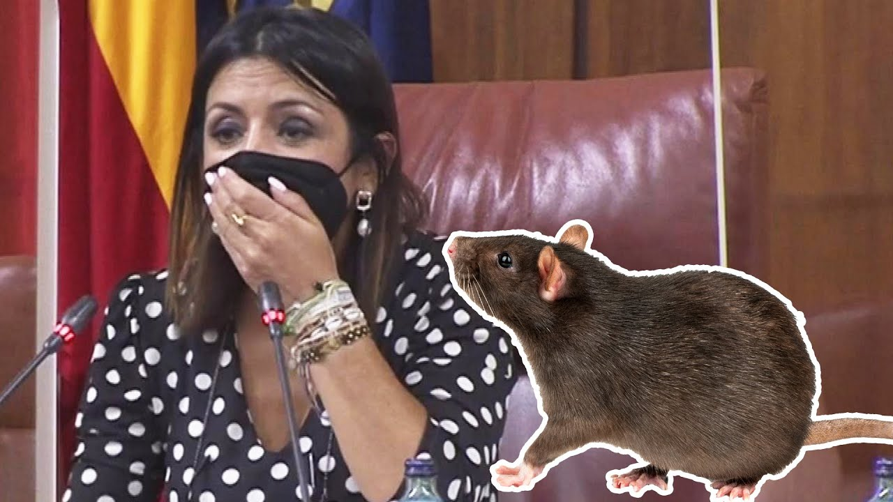 Download Giant Rat Sends Lawmakers Scurrying