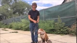 Strong Dog Leash Technique