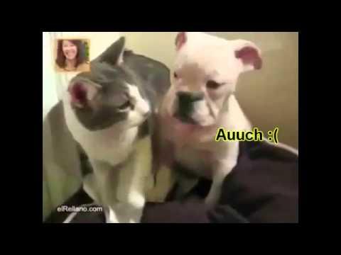 Gato abusando de un cachorro de perro. Videos divertidos y graciosos de animales y mascotas.