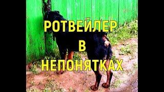 видео Как от спайса съехала крыша. Владимир Фахреев