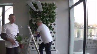 Вертикальное озеленение в квартире – как осуществить? + видео