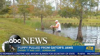 Puppy saved from alligator
