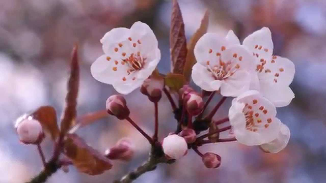 Top 15 most beautiful flowers in the world youtube top 15 most beautiful flowers in the world izmirmasajfo