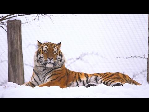 Schnee im Tiergarten