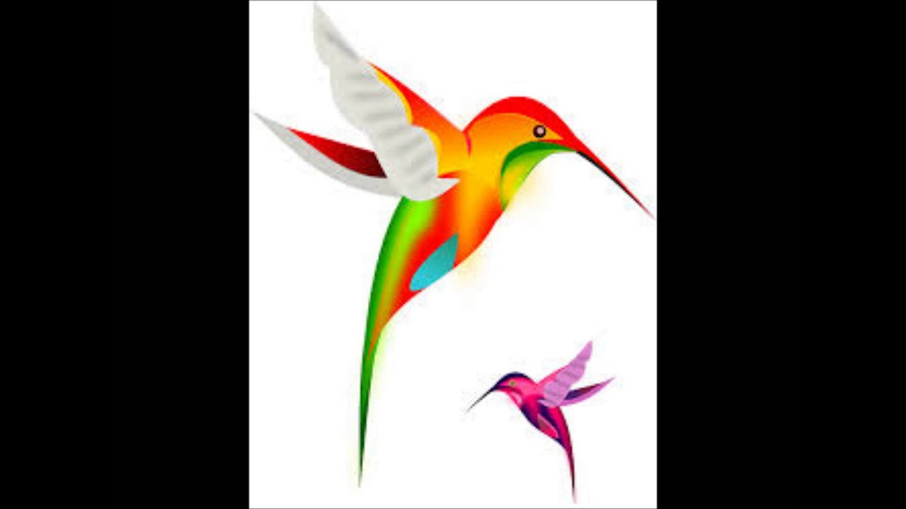 hummingbird diagram of color wiring reversing single phase motor ciclo de vida del colibri