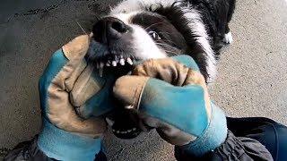 我が家の愛犬のハリーくんとアクションカメラを付けてマジ遊びです。 皮...
