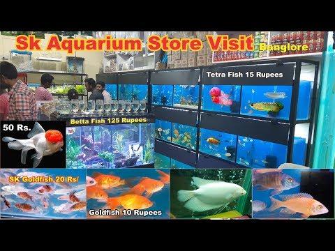 SK Aquarium Store Tour Aquarium Fish With Price Details In Banglore