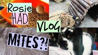VLOG: Rosie Had MITES!? | RosieBunneh