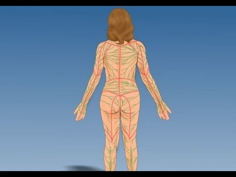 Estructura y función del sistema linfático - YouTube