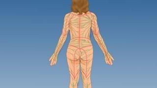 Se encuentran capilares donde linfáticos los