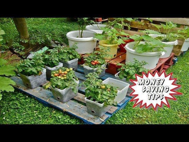 Beginners - Container Gardening Money Saving tips